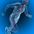 Running - vascular - Stock Photo