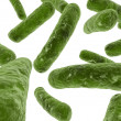 Major bacteria  — Stock Photo