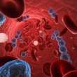 Streptococci in blood — Stock Photo