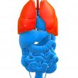 Highlighted lung - Stock Photo