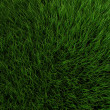 Grass — Stock Photo #12448733