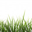 3d grass  — Stock Photo