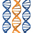 3d rendered illustration of three double helix — Stock Photo