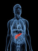 Highlighted pancreas — Foto Stock