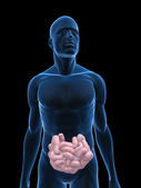 Human small intestine — Stock Photo