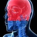 Human skull — Stock Photo #21048779