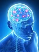 Active brain — Stock Photo