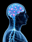 活跃的大脑 — 图库照片