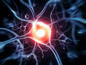 Nerve cell — Stock Photo