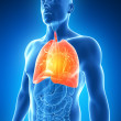 Male lung — Stock Photo #21053165