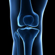 Royalty-Free Stock Photo: Knee anatomy