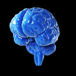 Stock Photo: Glossy blue brain