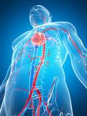 The human vascular system — Stock Photo