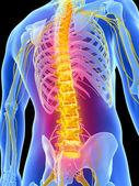 人类背痛 — 图库照片