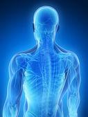 мужчины мышцы — Стоковое фото