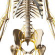 Male nerve system — Stock Photo
