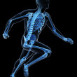 Runner anatomy on a black background - 图库照片