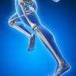 Runner anatomy on a blue background - Stock Photo