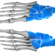 Bones of the hand — Stock Photo
