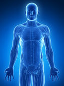 Ilustracja - mięśnie mężczyzna — Zdjęcie stockowe