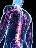 脊髓损伤 — 图库照片