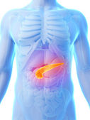 Human pancreatic — Foto Stock