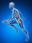 анатомия бегун на синем фоне — Стоковое фото