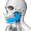 Jaw bone — Stock Photo