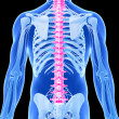 Stock Photo: Humspine