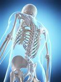 Erkek iskeleti — Stok fotoğraf
