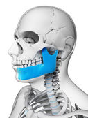 Jaw bone — Stock Photo