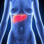 fígado — Foto Stock