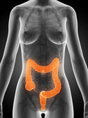 Female colon — Stock Photo