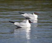 Seagull on the lake — Stock Photo