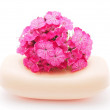 Carnation and soap on a white background — ストック写真