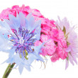 Flower bouquet on a white background — ストック写真