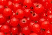 Red currant — Photo