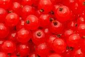 Groselha vermelha — Fotografia Stock