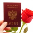Stock Photo: Rose and passport on white background