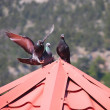 Pigeons on the roof — Stock Photo #22045515