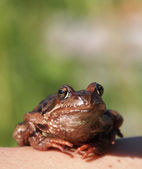 Photo of a frog sitting on a hand — Foto de Stock