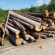 The logs on the road — Stock Photo
