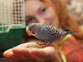 Parrot on hand — Stock Photo