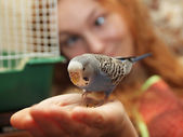 Parrot on hand — Stock fotografie