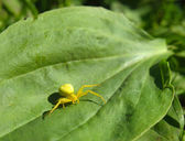 Yellow spider on a plant — Stock Photo