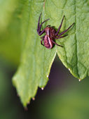 Spider on a leaf — 图库照片