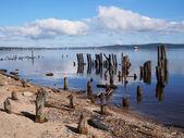 Stare pale w jeziorze — Zdjęcie stockowe