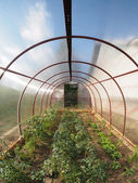 Greenhouse inside — Stock Photo