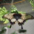 Tropical butterfly — Stockfoto