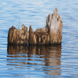 Old piles in the lake — Stock Photo #29650583
